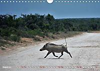 Südafrika - Von Kapstadt bis Addo Elephant Park (Wandkalender 2019 DIN A4 quer) - Produktdetailbild 8
