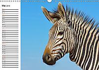 SÜDAFRIKAS Bergzebras (Wandkalender 2019 DIN A3 quer) - Produktdetailbild 5