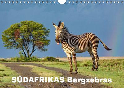 SÜDAFRIKAS Bergzebras (Wandkalender 2019 DIN A4 quer), Thula