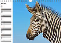 SÜDAFRIKAS Bergzebras (Wandkalender 2019 DIN A4 quer) - Produktdetailbild 5
