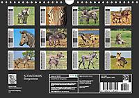 SÜDAFRIKAS Bergzebras (Wandkalender 2019 DIN A4 quer) - Produktdetailbild 13