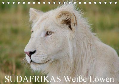SÜDAFRIKAS Weiße Löwen (Tischkalender 2019 DIN A5 quer), Thula