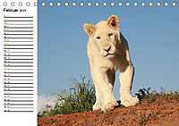 SÜDAFRIKAS Weiße Löwen (Tischkalender 2019 DIN A5 quer) - Produktdetailbild 2