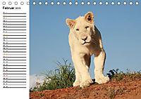 SÜDAFRIKAS Weisse Löwen (Tischkalender 2019 DIN A5 quer) - Produktdetailbild 2