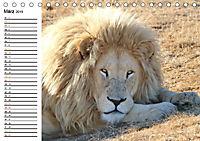 SÜDAFRIKAS Weisse Löwen (Tischkalender 2019 DIN A5 quer) - Produktdetailbild 3