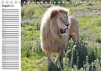 SÜDAFRIKAS Weiße Löwen (Tischkalender 2019 DIN A5 quer) - Produktdetailbild 8