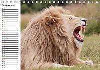 SÜDAFRIKAS Weisse Löwen (Tischkalender 2019 DIN A5 quer) - Produktdetailbild 10