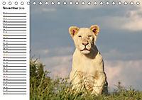 SÜDAFRIKAS Weiße Löwen (Tischkalender 2019 DIN A5 quer) - Produktdetailbild 11