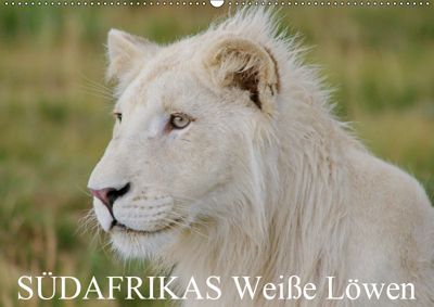 SÜDAFRIKAS Weiße Löwen (Wandkalender 2019 DIN A2 quer), Thula