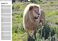 SÜDAFRIKAS Weisse Löwen (Wandkalender 2019 DIN A3 quer) - Produktdetailbild 8
