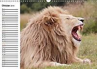SÜDAFRIKAS Weisse Löwen (Wandkalender 2019 DIN A3 quer) - Produktdetailbild 10
