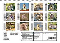 SÜDAFRIKAS Weisse Löwen (Wandkalender 2019 DIN A3 quer) - Produktdetailbild 13