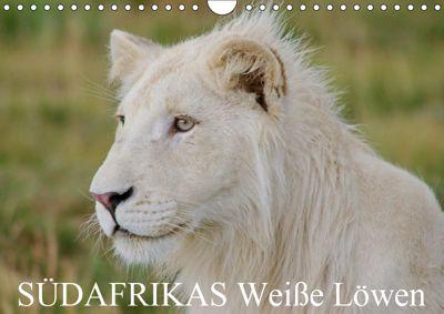 SÜDAFRIKAS Weiße Löwen (Wandkalender 2019 DIN A4 quer), Thula