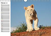 SÜDAFRIKAS Weiße Löwen (Wandkalender 2019 DIN A4 quer) - Produktdetailbild 2