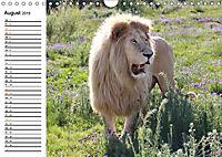 SÜDAFRIKAS Weiße Löwen (Wandkalender 2019 DIN A4 quer) - Produktdetailbild 8
