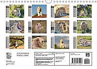 SÜDAFRIKAS Weiße Löwen (Wandkalender 2019 DIN A4 quer) - Produktdetailbild 13