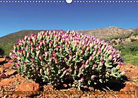 Südafrikas Wildblumen - Blütenpracht in der Kap-Region (Wandkalender 2019 DIN A3 quer) - Produktdetailbild 7