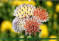 Südafrikas Wildblumen - Blütenpracht in der Kap-Region (Wandkalender 2019 DIN A3 quer) - Produktdetailbild 2