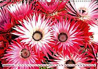 Südafrikas Wildblumen - Blütenpracht in der Kap-Region (Wandkalender 2019 DIN A3 quer) - Produktdetailbild 9