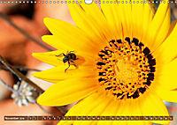 Südafrikas Wildblumen - Blütenpracht in der Kap-Region (Wandkalender 2019 DIN A3 quer) - Produktdetailbild 11