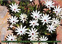 Südafrikas Wildblumen - Blütenpracht in der Kap-Region (Wandkalender 2019 DIN A3 quer) - Produktdetailbild 10