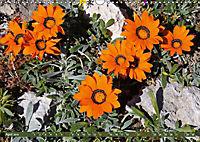 Südafrikas Wildblumen - Blütenpracht in der Kap-Region (Wandkalender 2019 DIN A3 quer) - Produktdetailbild 4
