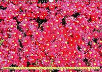 Südafrikas Wildblumen - Blütenpracht in der Kap-Region (Wandkalender 2019 DIN A3 quer) - Produktdetailbild 12