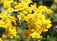 Südafrikas Wildblumen - Blütenpracht in der Kap-Region (Wandkalender 2019 DIN A3 quer) - Produktdetailbild 8