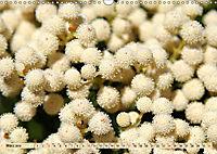 Südafrikas Wildblumen - Blütenpracht in der Kap-Region (Wandkalender 2019 DIN A3 quer) - Produktdetailbild 3