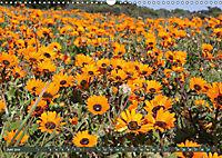 Südafrikas Wildblumen - Blütenpracht in der Kap-Region (Wandkalender 2019 DIN A3 quer) - Produktdetailbild 6