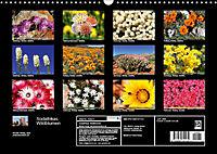 Südafrikas Wildblumen - Blütenpracht in der Kap-Region (Wandkalender 2019 DIN A3 quer) - Produktdetailbild 13