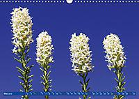 Südafrikas Wildblumen - Blütenpracht in der Kap-Region (Wandkalender 2019 DIN A3 quer) - Produktdetailbild 5