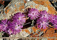 Südafrikas Wildblumen - Blütenpracht in der Kap-Region (Wandkalender 2019 DIN A3 quer) - Produktdetailbild 1