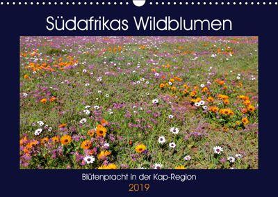Südafrikas Wildblumen - Blütenpracht in der Kap-Region (Wandkalender 2019 DIN A3 quer), Michael Herzog