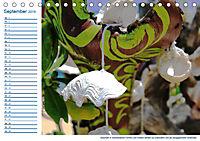 Südsee-Insel Mo'orea (Tischkalender 2019 DIN A5 quer) - Produktdetailbild 9
