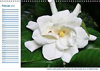 Südsee-Insel Mo'orea (Wandkalender 2019 DIN A3 quer) - Produktdetailbild 2