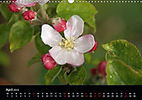 Südtirol, die Perle Italiens (Wandkalender 2019 DIN A3 quer) - Produktdetailbild 4