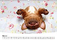 Süße Träume 2019 - schlafende Hundewelpen (Wandkalender 2019 DIN A3 quer) - Produktdetailbild 5