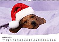 Süße Träume 2019 - schlafende Hundewelpen (Wandkalender 2019 DIN A3 quer) - Produktdetailbild 12