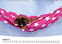 Süße Träume 2019 - schlafende Hundewelpen (Wandkalender 2019 DIN A3 quer) - Produktdetailbild 8