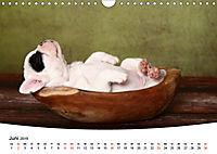 Süße Träume 2019 - schlafende Hundewelpen (Wandkalender 2019 DIN A4 quer) - Produktdetailbild 6