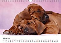 Süße Träume 2019 - schlafende Hundewelpen (Wandkalender 2019 DIN A4 quer) - Produktdetailbild 1