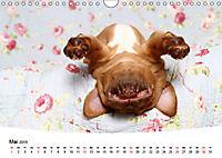 Süße Träume 2019 - schlafende Hundewelpen (Wandkalender 2019 DIN A4 quer) - Produktdetailbild 5