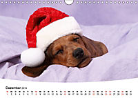 Süße Träume 2019 - schlafende Hundewelpen (Wandkalender 2019 DIN A4 quer) - Produktdetailbild 12