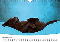 Süße Träume 2019 - schlafende Hundewelpen (Wandkalender 2019 DIN A4 quer) - Produktdetailbild 11