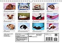 Süße Träume 2019 - schlafende Hundewelpen (Wandkalender 2019 DIN A4 quer) - Produktdetailbild 13