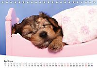 Süße Träume 2019 - schlafende Hundewelpen (Tischkalender 2019 DIN A5 quer) - Produktdetailbild 4
