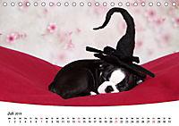 Süße Träume 2019 - schlafende Hundewelpen (Tischkalender 2019 DIN A5 quer) - Produktdetailbild 7