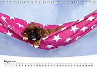 Süße Träume 2019 - schlafende Hundewelpen (Tischkalender 2019 DIN A5 quer) - Produktdetailbild 8