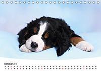Süße Träume 2019 - schlafende Hundewelpen (Tischkalender 2019 DIN A5 quer) - Produktdetailbild 10